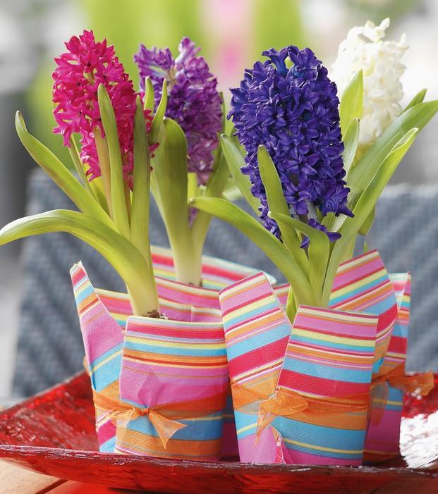 Hiacynty – kwiaty idealne na Dzień Kobiet