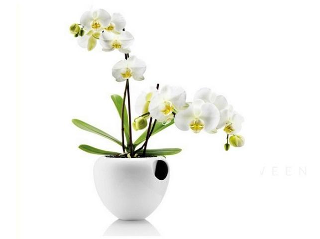 Samopodlewająca Doniczka Do Orchidei Seniorzy24