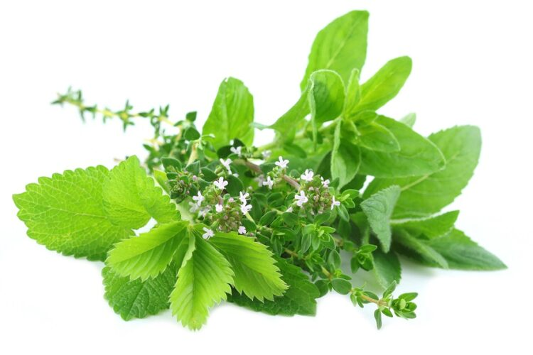 zioła dla zdrowia